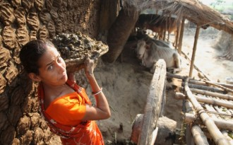 A woman drying cattle dung for household fuel in West Bengal, India (Image by ILRI/Stevie Mann)
