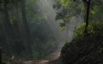 Forest situation worries experts, despite minister's promise