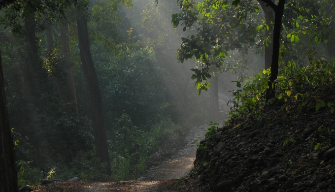 The Indian government to release Rs 33,000 crore ($5.3 billion) from the CAMPA fund that was set up in 2009 to promote afforestation and regeneration (Image by netlancer2006)