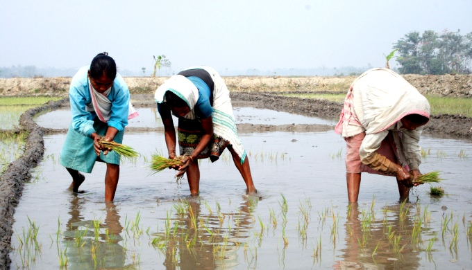 Women working in a paddy field in flood-prone Assam (Image by Diganta Talukdar)