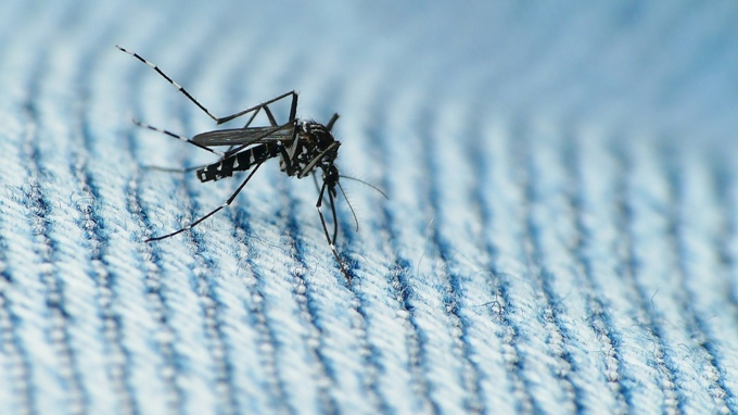 Entire India is vulnerable to dengue transmission due to higher temperatures, according to a study. (Image by coniferconifer)