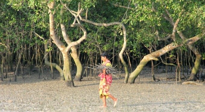 A woman in the Sundarbans, the world's largest mangrove forest