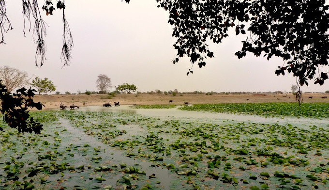 An old village pond in Hamirpur district still retains water because it was built keeping in mind the contours of the land. (Image by Soumya Sarkar)