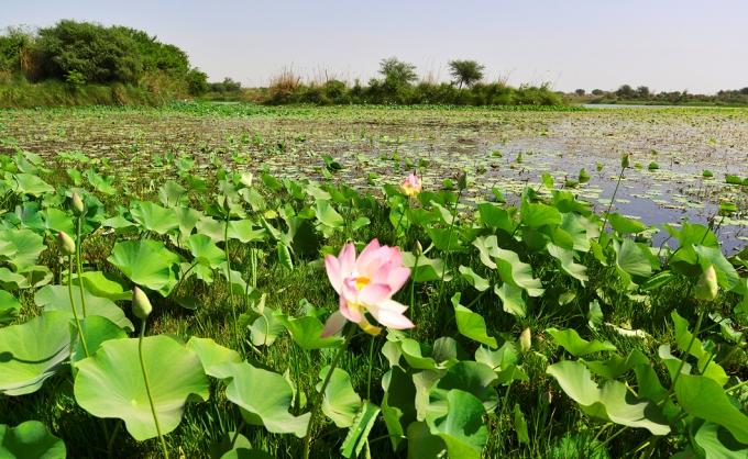 A pristine stretch of Yamuna basin in Yamuna Biodiversity Park