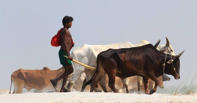 People living in chars generally depend on agriculture, fishing or cattle rearing. (Image by Onu Tareq)