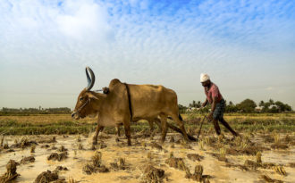 Farmers start adapting to climate-related risks in south Asia