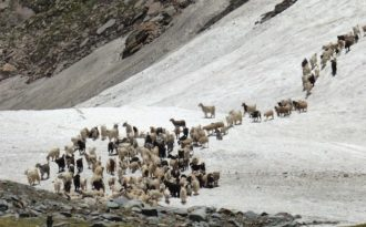 Pastoral tradition in Spiti faces climate threat
