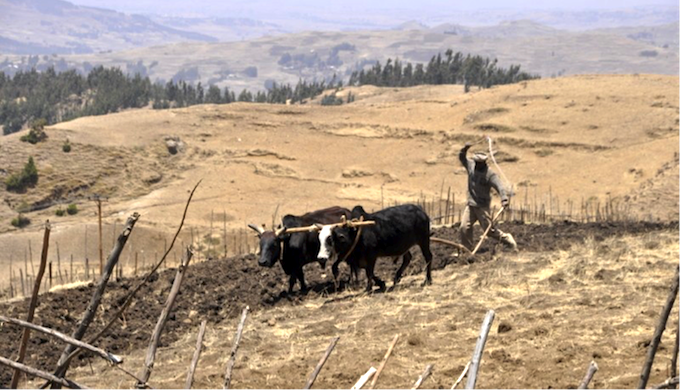 The tough environment of the Yewol watershed in the highlands of Ethiopia. (Photo by Joanna Kane-Potaka)