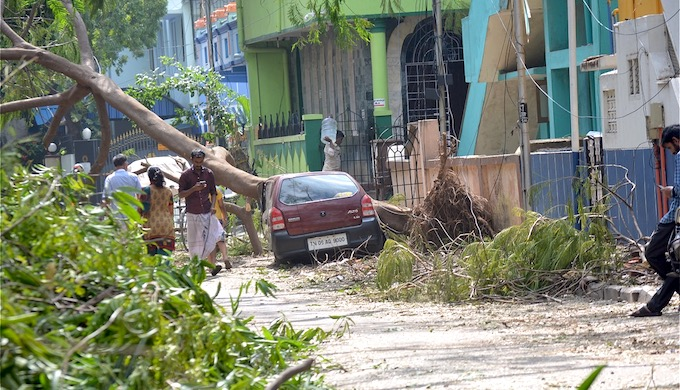 A large number of trees were uprooted in the cyclonic storm. (Photo by S. Gopikrishna Warrier)