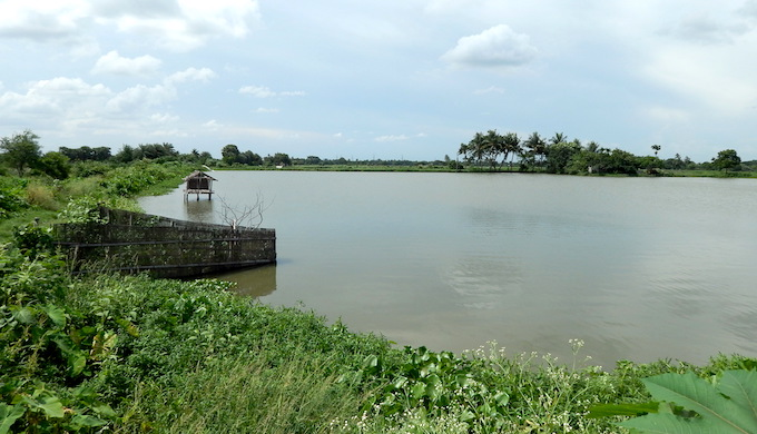 Wastewater fisheries are a unique feature of Kolkata wetlands. (Photo by Sudeshna Ghosh)