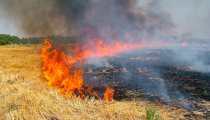 Burning of crop residues is a hazardous annual practice in India. (Photo by Manfred Sommer)