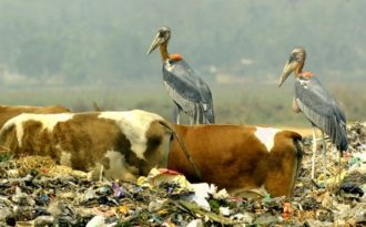 Turn waste into climate-friendly resource