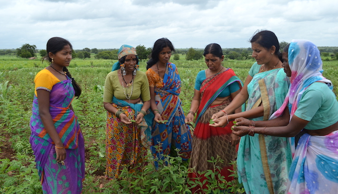Women farmers learning the nitty-gritty of the one-acre model. (Photo by Swayam Shikshan Prayog)