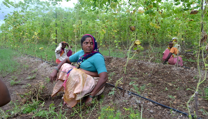 Climate-resilient farming has ensured food and nutrition security for villagers in drought-prone Marathwada. (Photo by Swayam Shikshan Prayog)