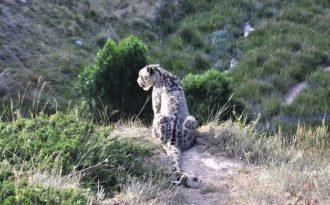 Best of 2017: Climate change jeopardises survival of snow leopards