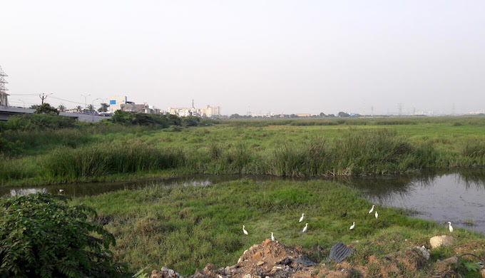 The Pallikaranai Marsh in the southern part of the city with water streams draining into it (Photo by S. Gopikrishna Warrier)