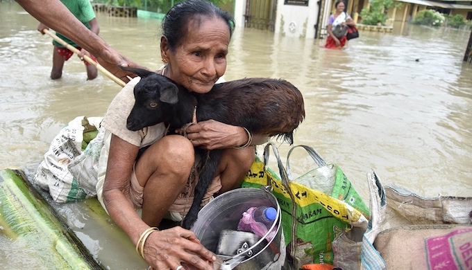 A flood affected resident of Jakhalabandha, on the south bank of the Brahmaputra in Assam, being evacuated on a raft on August 13, along with the family's livestock (Photo by Biju Boro)