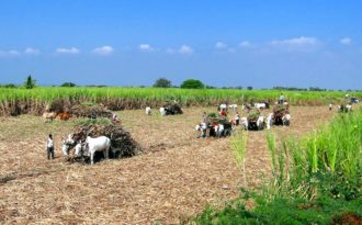Climate change may shrink India's farm incomes by 25%