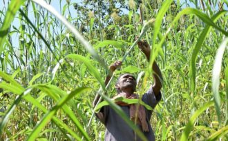 Traditional tribal farming shows way to climate-smart agriculture