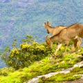 Nilgiris threatened by climate change