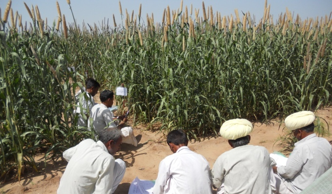 Indian farmers inspecting millet - a climate-smart but neglected crop that grows in arid region (Image by C.Bonham)