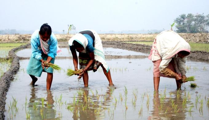 Women working in a paddy field in flood-prone Assam (Image by Diganta Talukdar)
