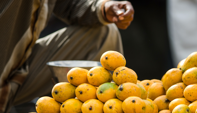 Climate blight is harming the mango