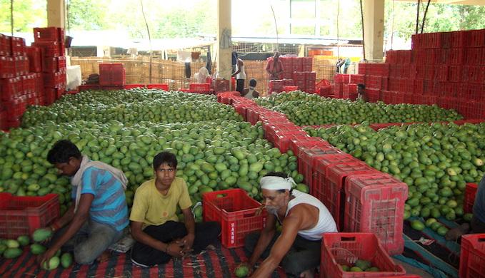 Wholesale mango market in Warrangal, Andhra Pradesh. (Photo by Pallavi Rajkhowa)