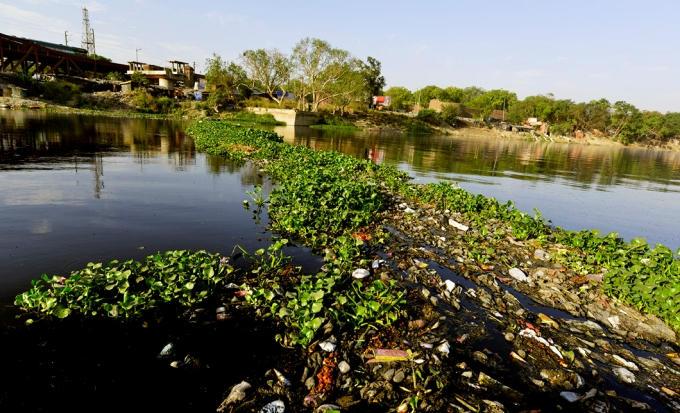 Downstream of the Wazirabad barrage, it is all drain water, as seen at Qudsia Ghat here. Water hyacinth and garbage combine to produce a nauseating stench