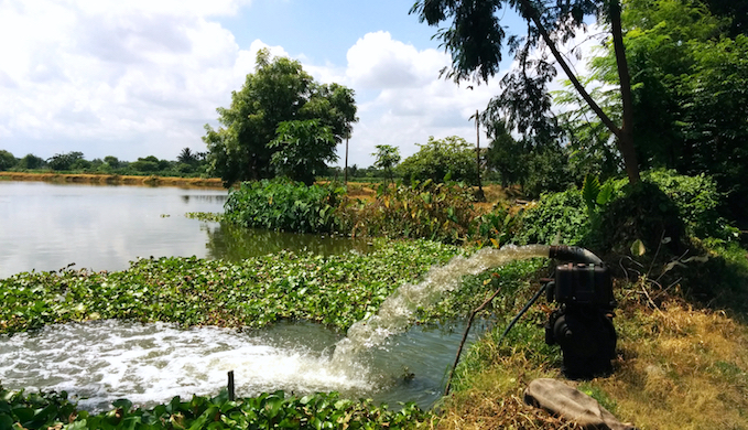 The cost of pumping water into the shallow fishponds of Kolkata wetlands makes aquaculture unremunerative. (Photo by Soumya Sarkar)