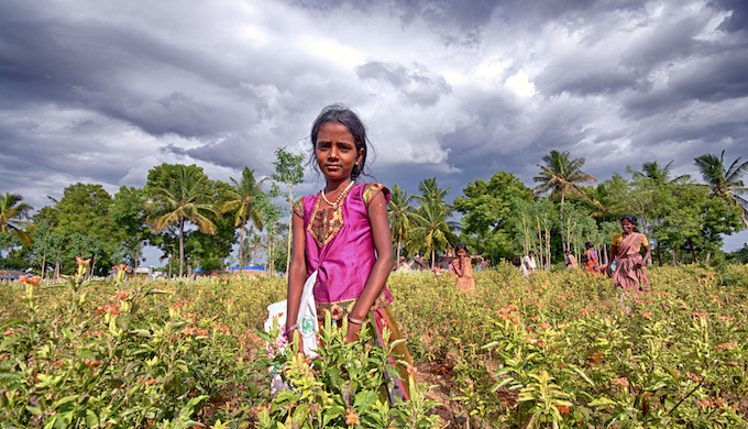 A storm brewing over a Kanakambara flower farm in Tamil Nadu. (Photo by Prabhu B Doss)