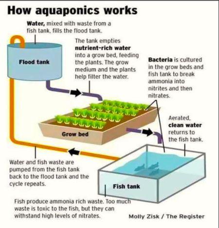 2  Aquaponics - India Climate Dialogue
