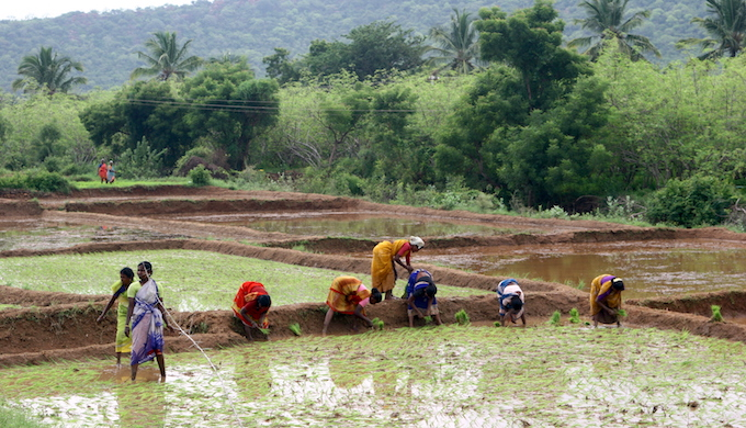 Women planting rice. (Photo by Yashima)