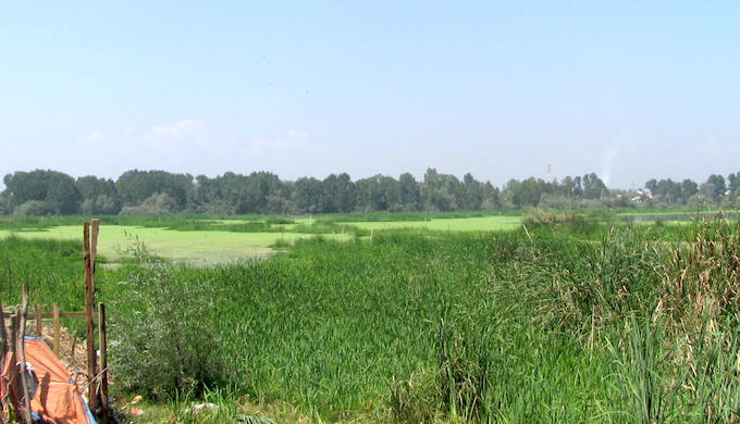 Once a vast wetland, Khoshalsar wetland in Srianagr has mainly diminished during the years of conflict with massive encroachments. (Photo by Athar Parvaiz)