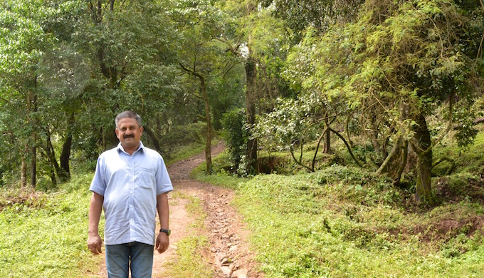 B.B. Thammaiah in his coffee farm where the plants are grown under the shade of native evergreen trees. (Photo by S. Gopikrishna Warrier)