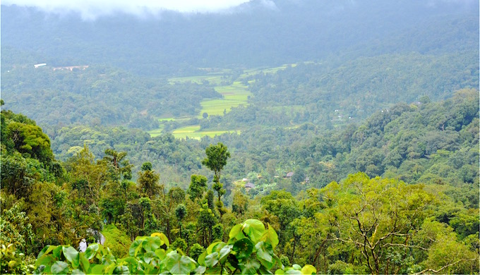 The forested landscape of Kodagu provides ecosystem services. (Photo by S Gopikrishna Warrier)
