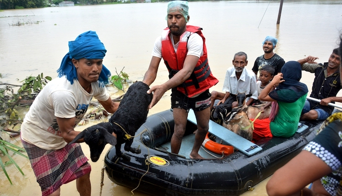 People and livestock had to be evacuated from the low lying areas of Agartala. (Photo by Tripurainfo.com)