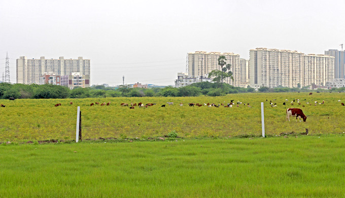 There are very few agricultural fields remaining in Perumbakkam in the southern reaches of Chennai, with high-rise apartment complexes dotting the skyline (Photo by Sibi Arasu)