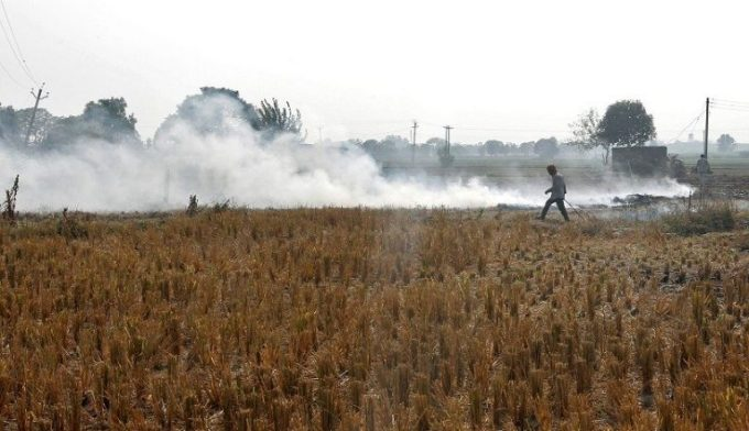 A man burns paddy waste stubble in a field on the outskirts of Chandigarh, India, on November 8, 2016 [image by: Reuters/Ajay Verma]