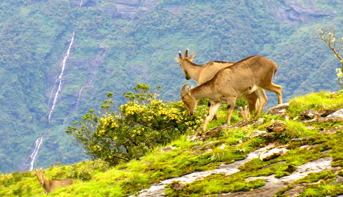 Best of 2018: Nilgiris threatened by climate change