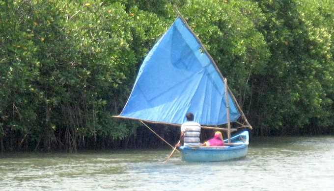 Protecting Pichavaram mangroves in coastal Tamil Nadu