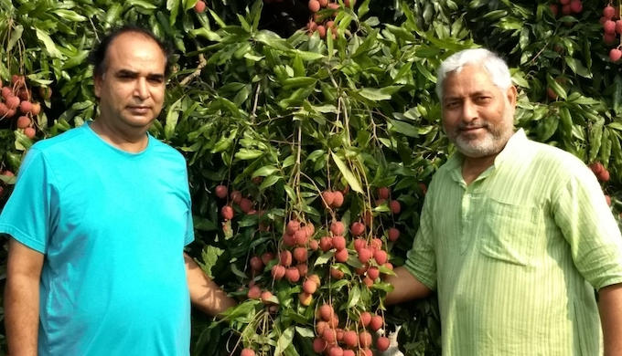 Best of 2018: Litchi orchards wilt under changing climate