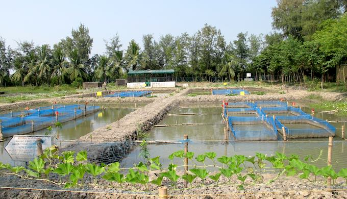 Aquaculture is practiced widely across the Sundarbans (Photo by Dhruba Dasgupta)