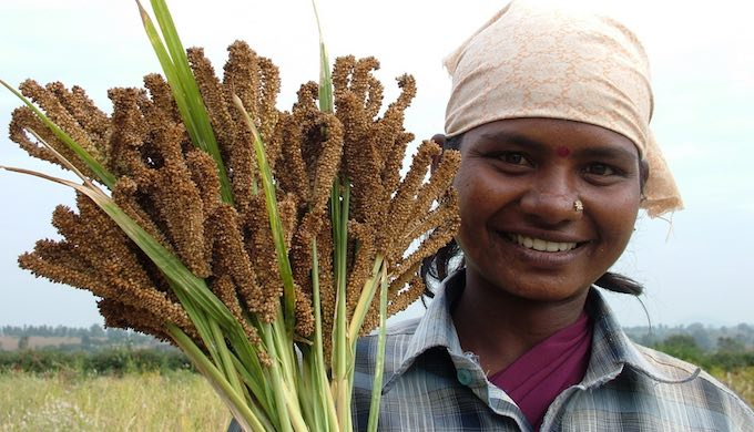 Farmers turn to millets as a climate-smart crop