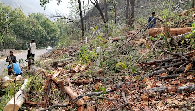 As many as 50,000 trees are being felled for the project. Several trees are also falling due to soil erosion and that loss is not even considered (Photo by Hridayesh Joshi)