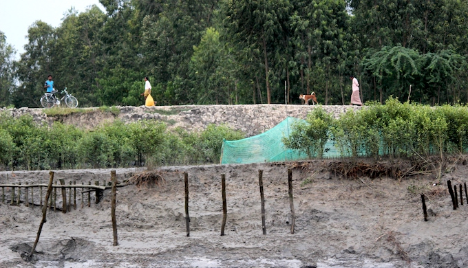 Saline land will drive people out of Sundarbans