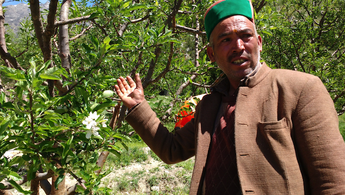 An apple farmer in Kinnaur with his trees (Photo by Manu Moudgil)