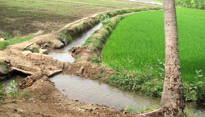 In the absence of any regulation, Indian farmers are over-irrigating their fields, resulting in a water crisis (Photo by Flickr)