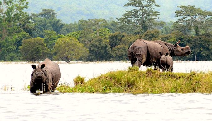 Tracking carbon sink shifts in Kaziranga National Park