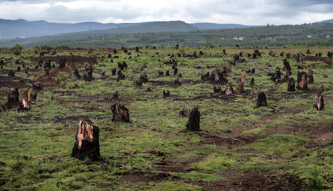 Deforestation and slash and burn agriculture pose a serious threat to biodiversity (Photo by Dudarev Mikhail)